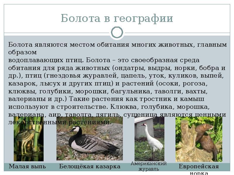 туника болота россии сообщение проводных интерфейсах