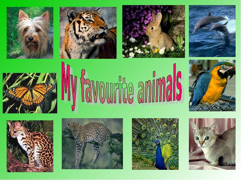 how to protect wild animals essay