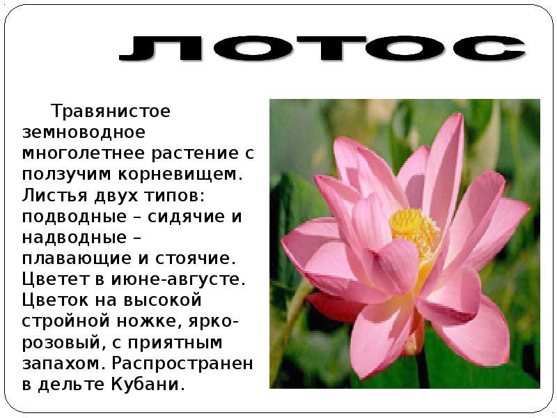 голода картинки растений из красной книги краснодарского края вот