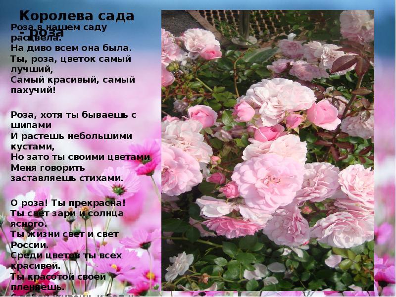 отели стихотворение о розе хотите поздравить родных