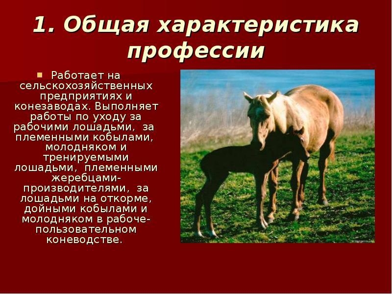 Уход за рабочими лошадями