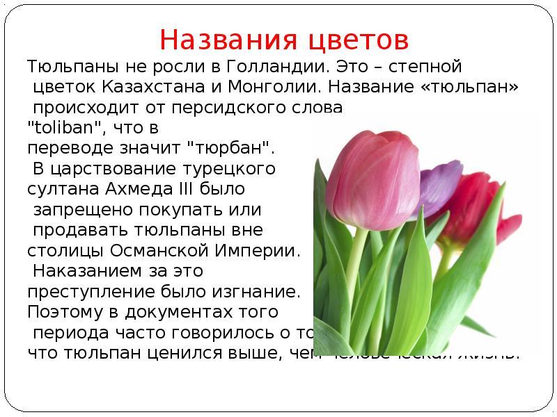 Пара тюльпанов чистый перевод на русском языке, фото упс невесты