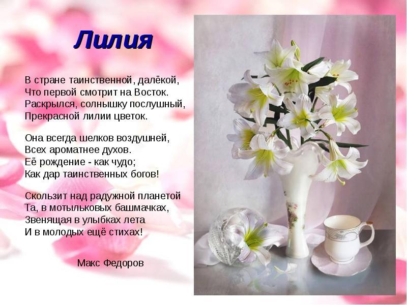 Стих цветка лилии