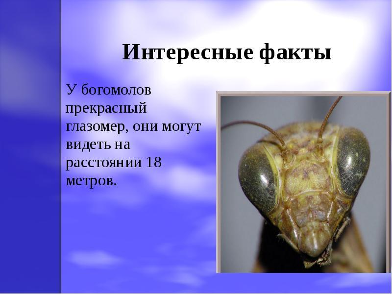 интересные факты о бокоплавов