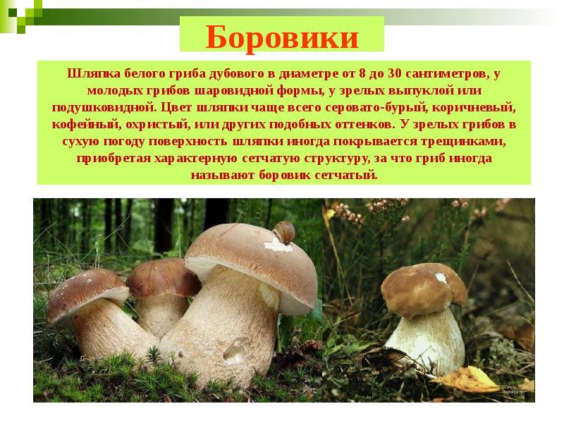 Другое название белого гриба