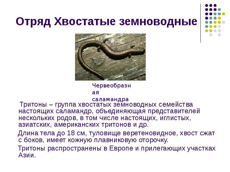 доклад по биалогии про тритона электричек Москва Ярославская