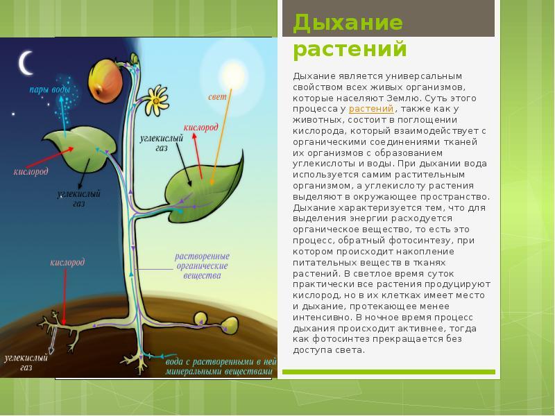 питание растений фотосинтез биология 6 класс