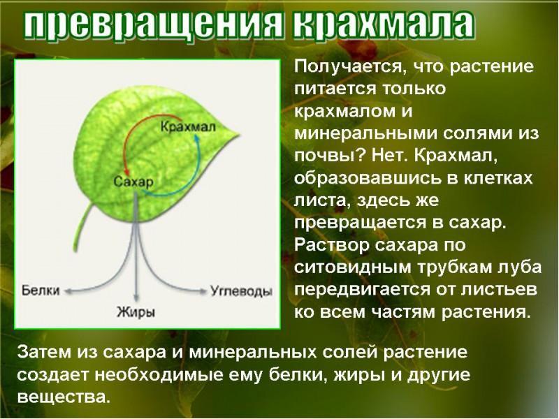 доклад воздушное питание фотосинтез хоррора