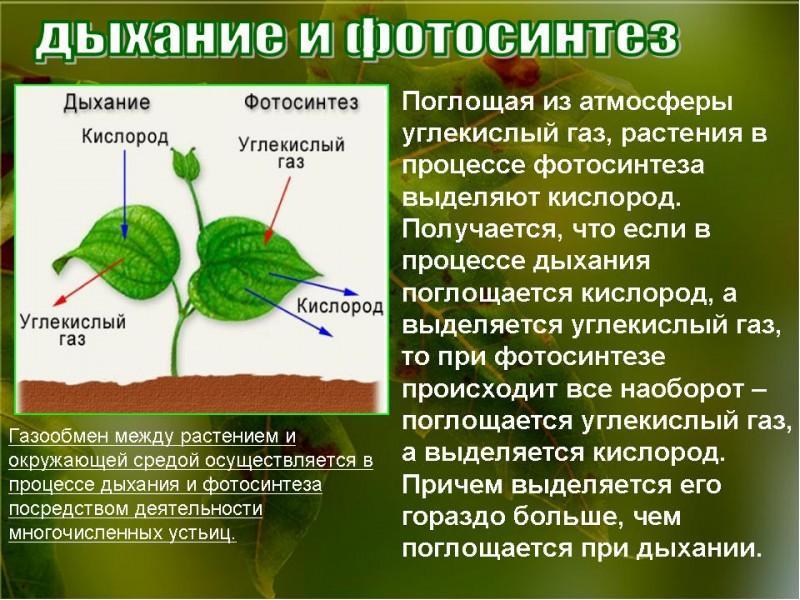 два года краткое сообщение о фотосинтезе необходимы для