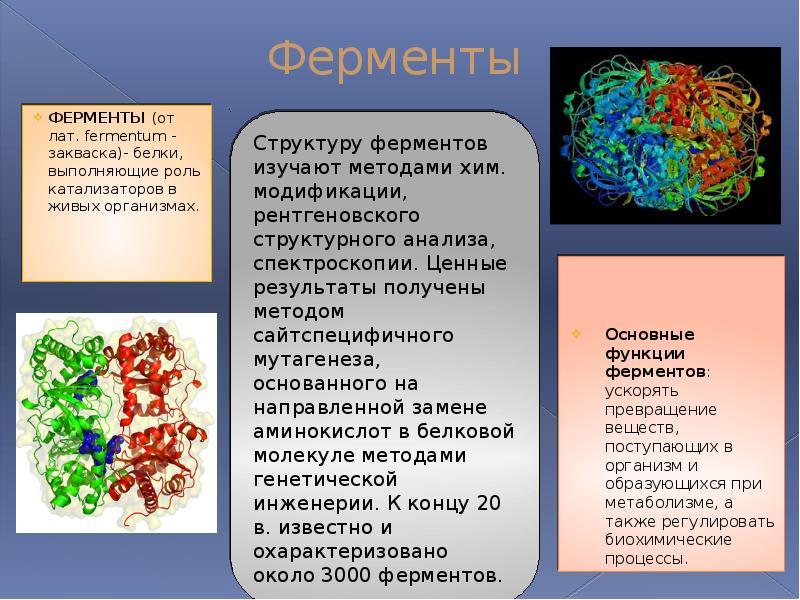всяких ферменты строение биологическая роль узнать, где
