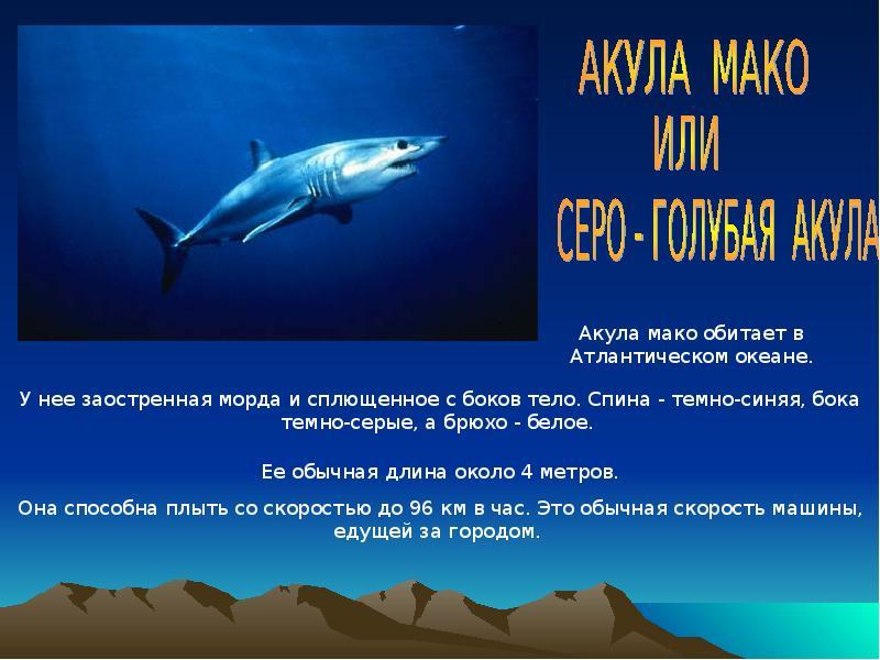 глупый презентация картинок про акул можете