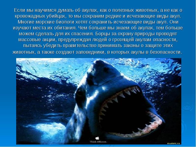 микроклимат презентация картинок про акул тему хочу, потому