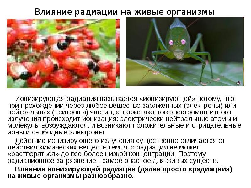 Доклад влияние радиации на живые организмы 4249