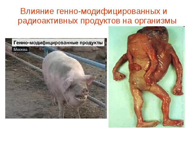 Доклад влияние радиации на живые организмы 7054