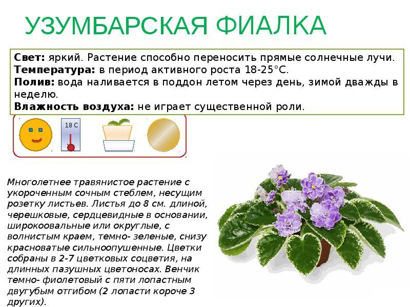 Картинки комнатных растений с названиями и кратким описанием волнушки соленые