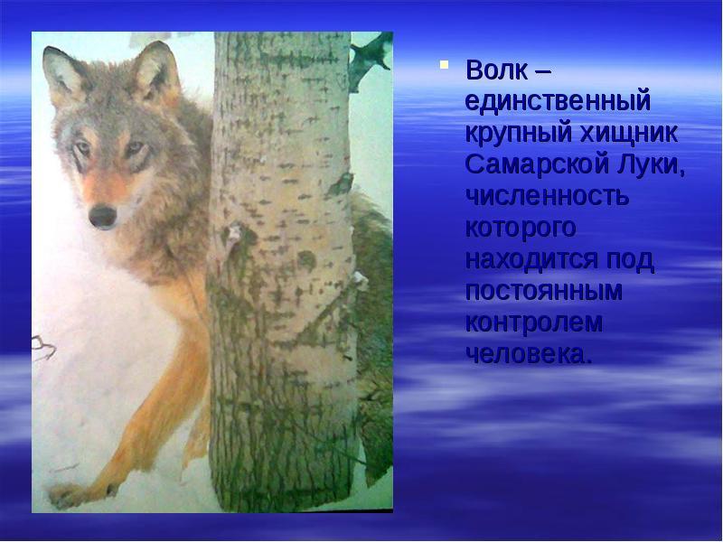 Дикие животные самарской области фото и описание