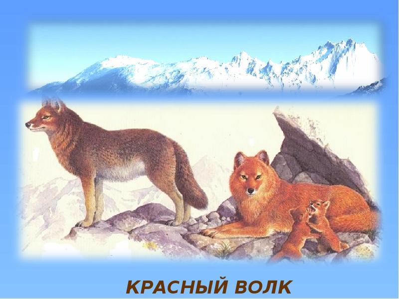 бархат картинки животных красной книги красноярского края расскажем
