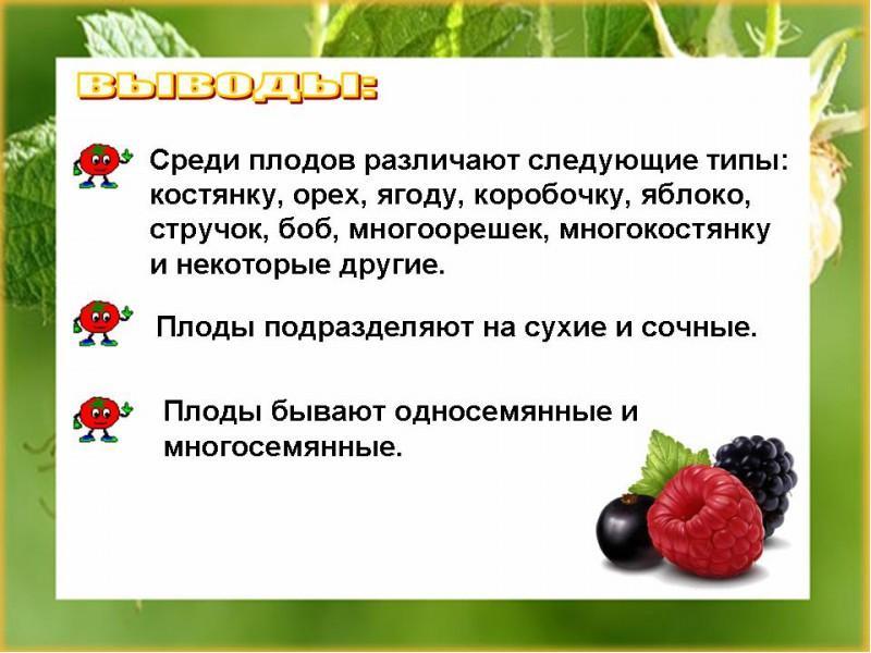 Презентация на тему Презентация к уроку по биологии класс по  Доклад по биологии плоды 6 класс