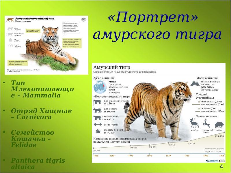 основных текст про амурского тигра стен