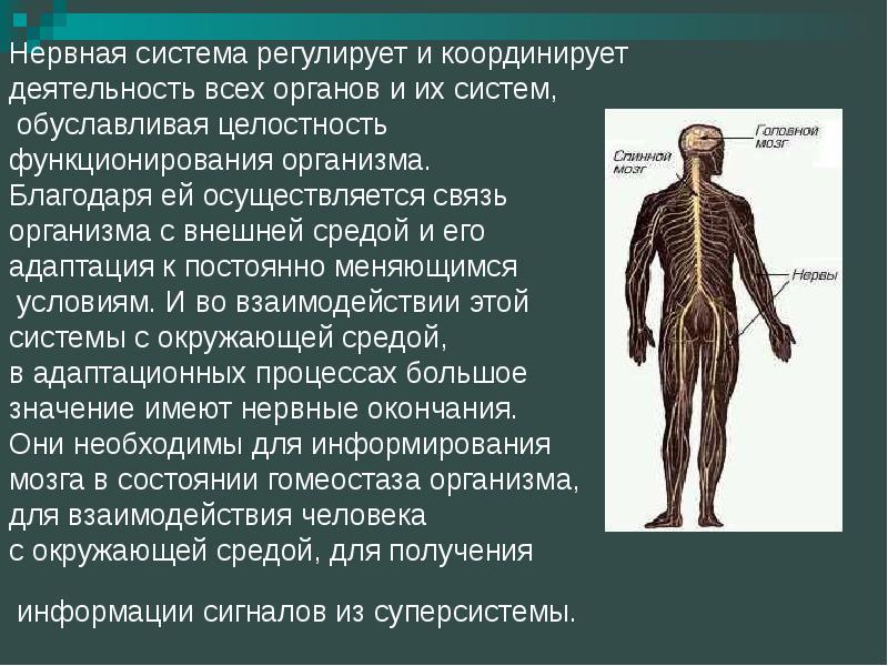Какие изменения нервной системы связаны