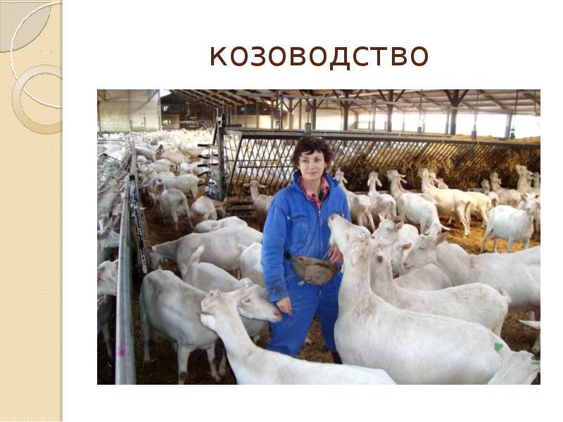 Поздравление работников сельского хозяйства с профессиональным праздником ростовской области