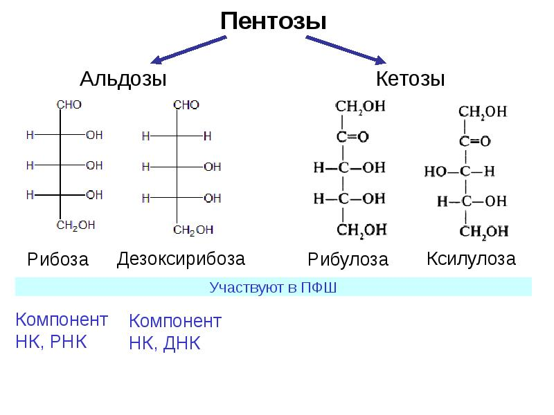 The carbohydrates page provides an overview of the chemistry of the major carbohydrates