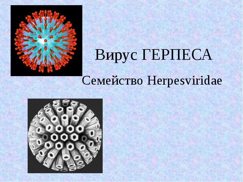 Вирус Герпеса. Семейство Herpesviridae - презентация, доклад, проект