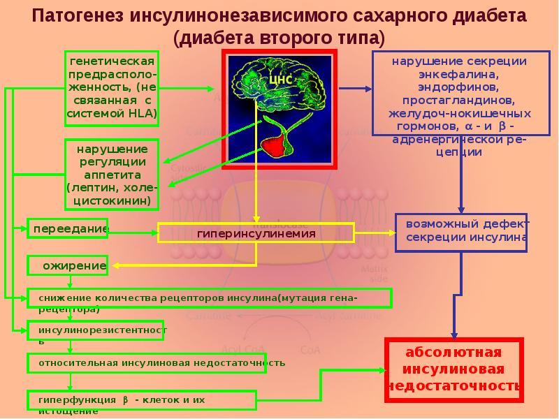 Механизмы нарушений диабета 1 типа