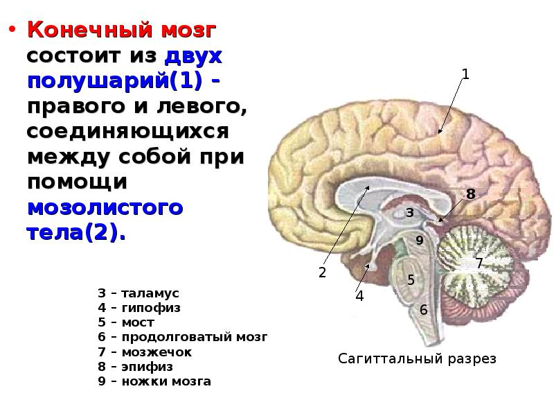 https://myslide.ru/documents_3/12b492b7177136ebf1d04eace0ee24b8/img3.jpg