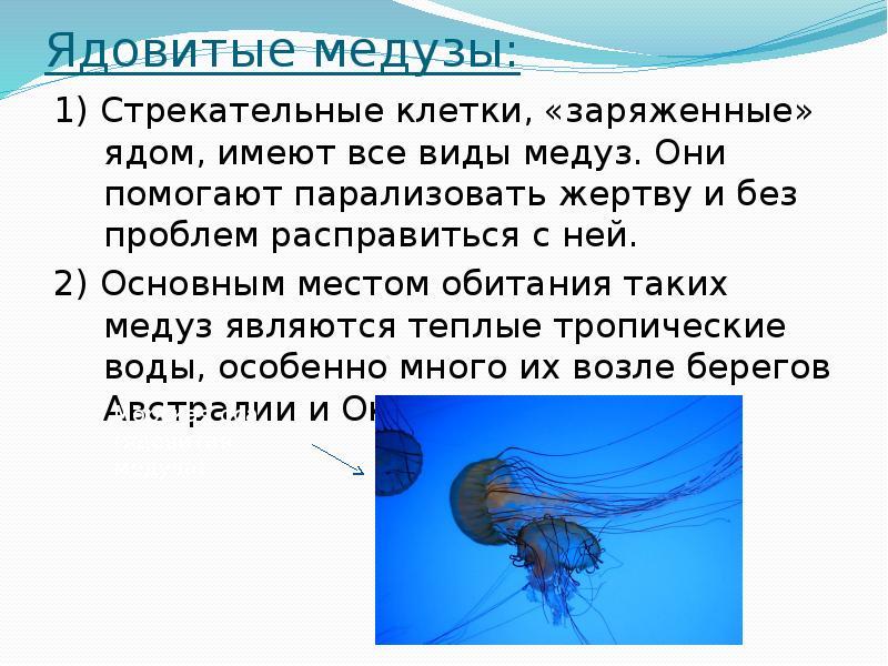 Картинки медузы с описанием