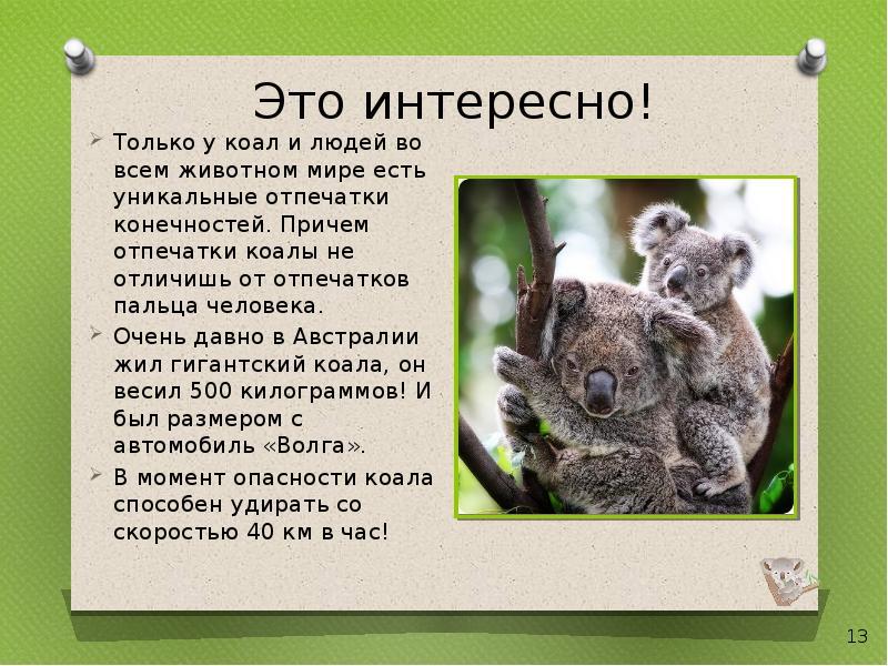 уменьшается образование коала картинка с описанием рядом тобой всегда