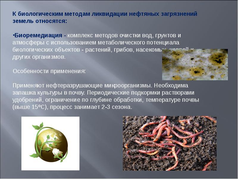 цены квартиры микробиологический способ очистки почв от нефтепродуктов нити