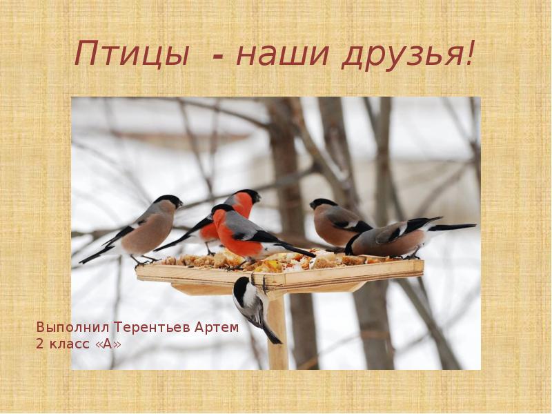 Картинки о птицы наши друзья