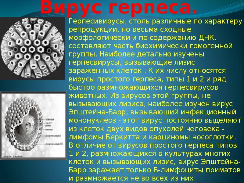 Вирусы - возбудители заболеваний - презентация, доклад, проект