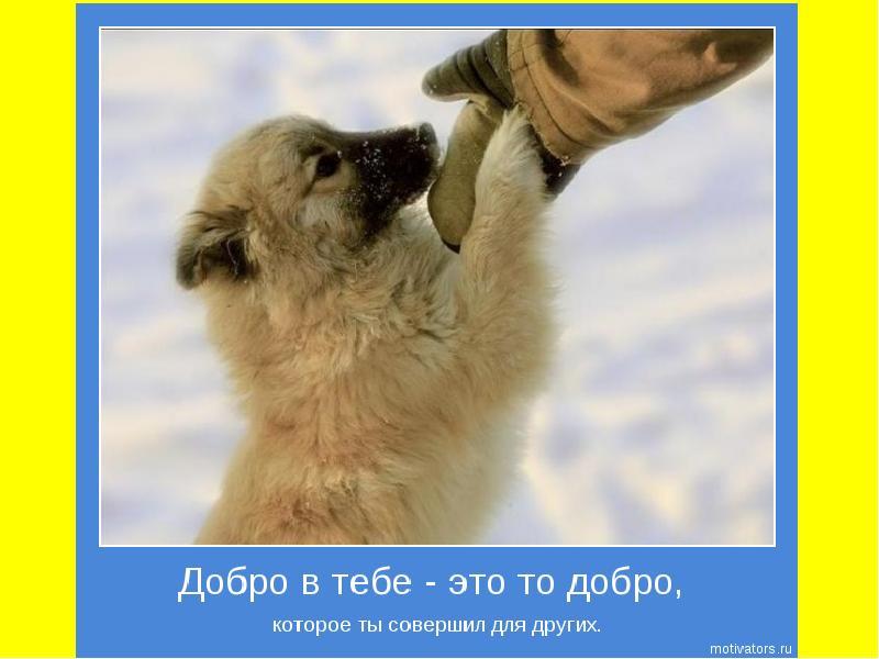 картинки твори добро животными