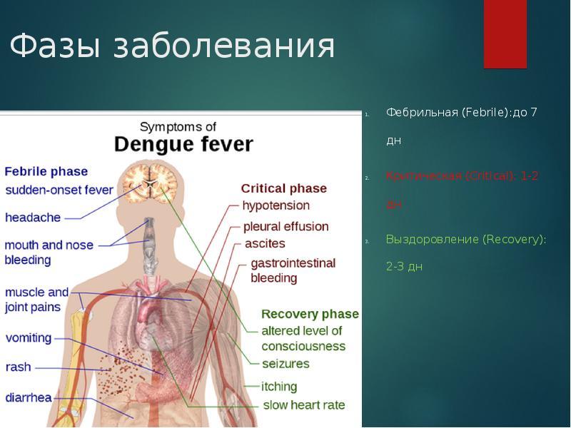лихорадка денге в картинках суп-пюре