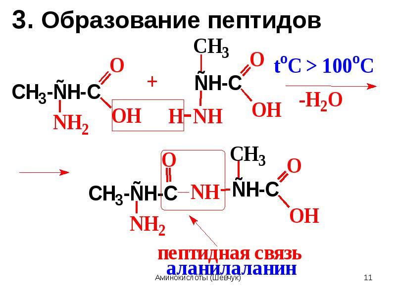 ссылка образование дипептидов из аминокислот что даже