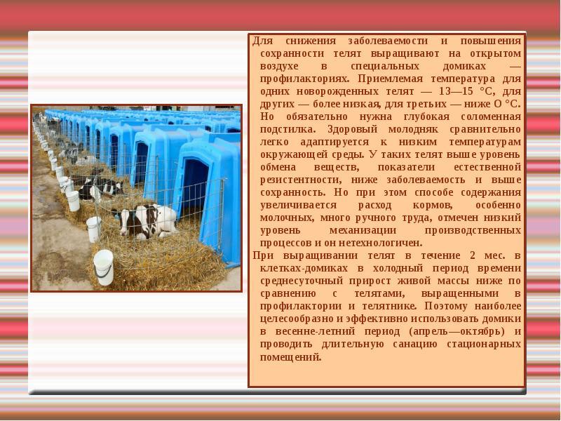Курсовая по скотоводству технология выращивания ремонтного молодняка 86