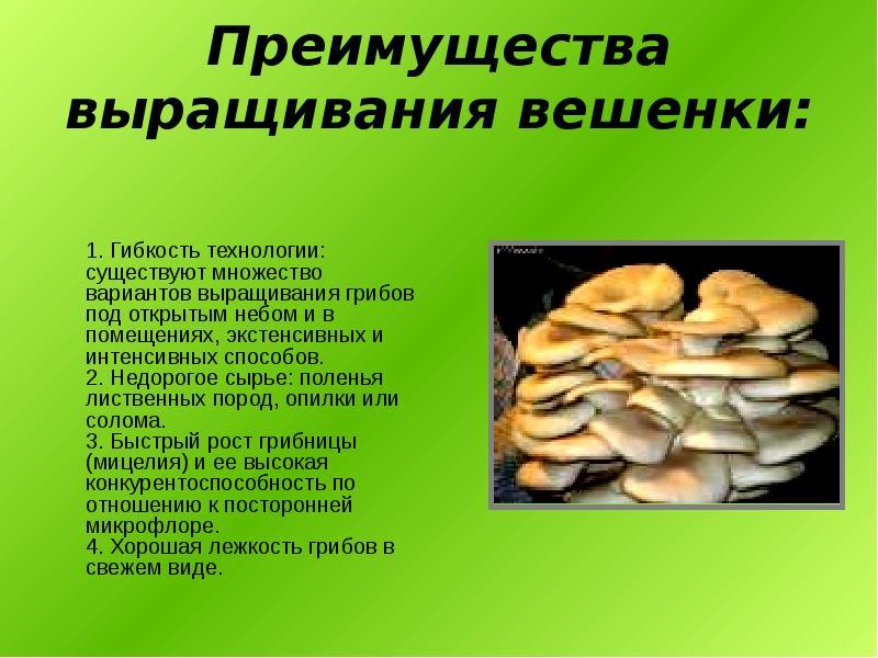 Обучение технологии выращивания грибов 40