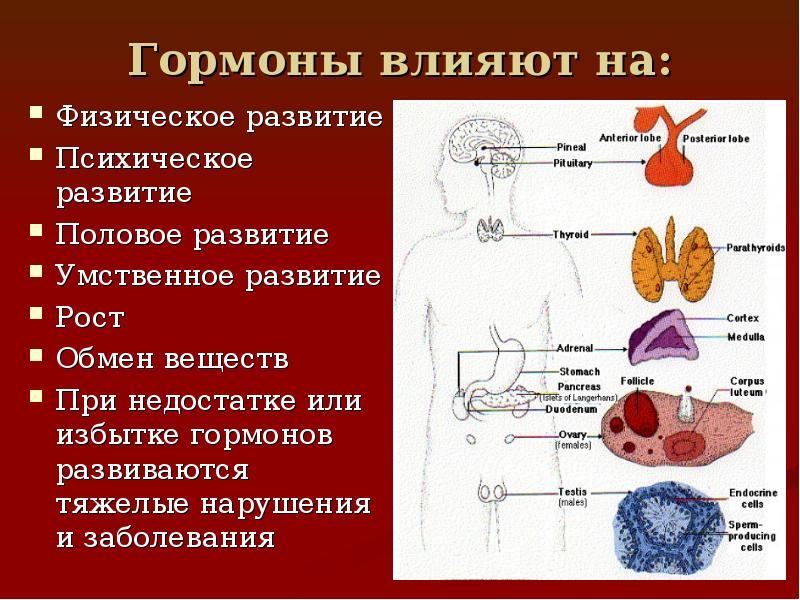 Как гормоны влияют на организм женщины
