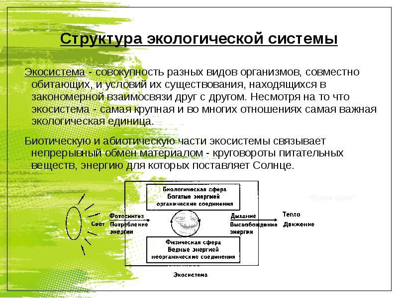 Доклад структура экологической системы 8074