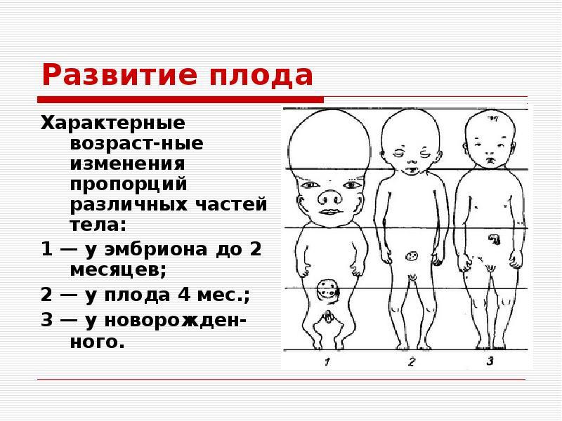 шикарный, возраст разных частей тела Пьера Безухова