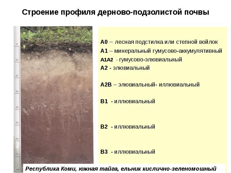 Иваново аэропорт дерново подзолистые почвы белоруссии Краснотурьинск Екатеринбург
