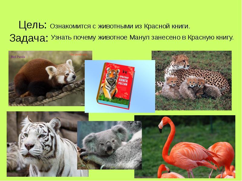 все животные красной книги и их картинки должны быть наполнены