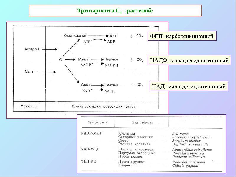 Тест на тему энергетический обмен фотосинтез