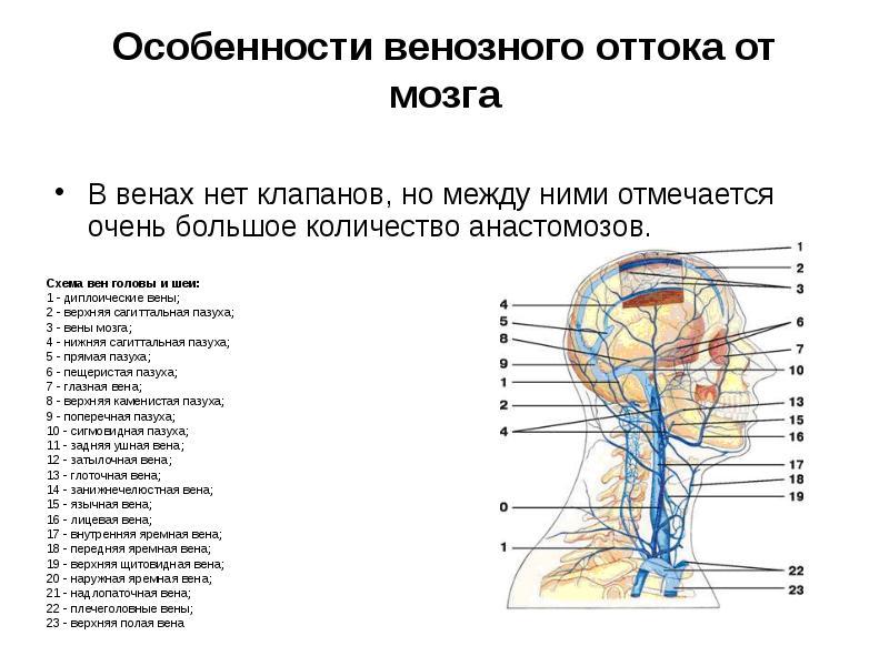 Нарушение внутричерепного венозного оттока что такое