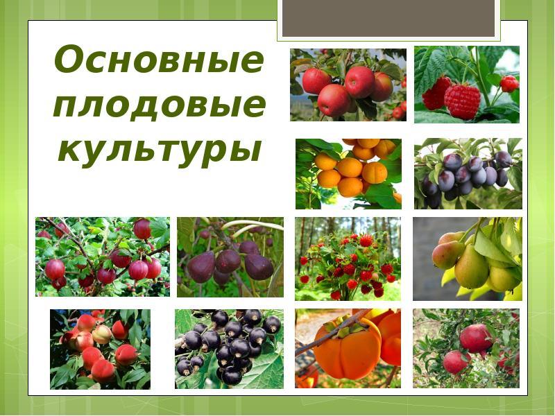 Уход за плодово ягодными культур 142