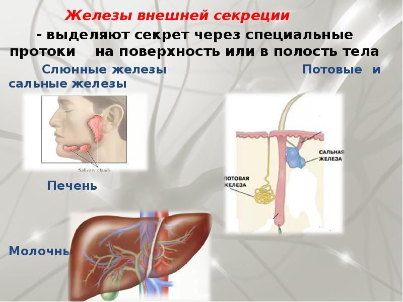 картинки желез внешней секреции после воплотить его