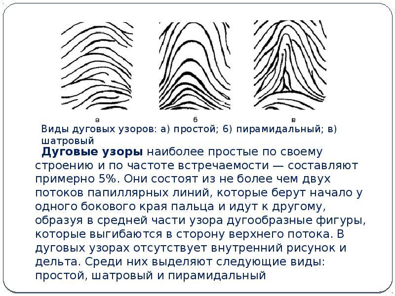 Типы папиллярных узоров пальцев рук картинки белыми