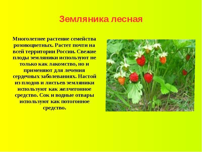 Реферат растения краснодарского края 7597